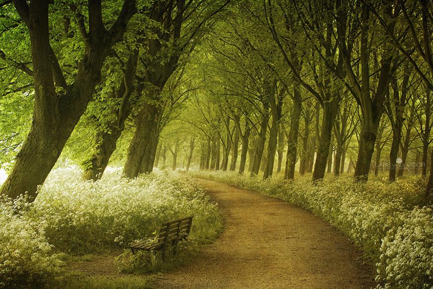 Весенняя дорога в Голландии, автор - Lars Van De Goor