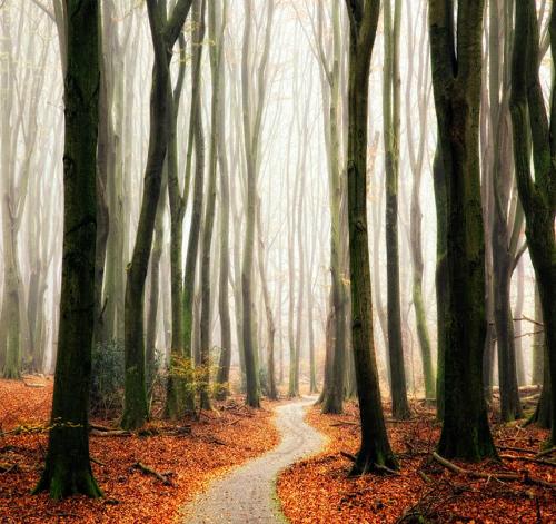 Лесная тропинка осенью, автор - Lars Van De Goor