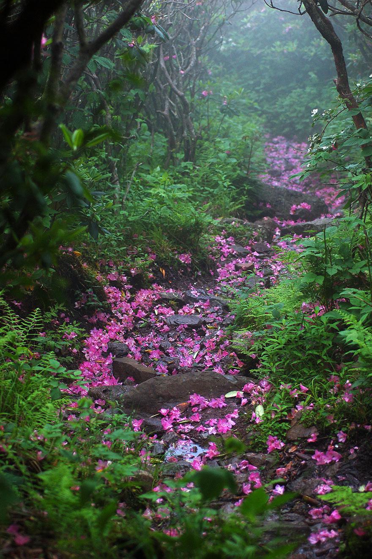 Рододендроновый груженый путь: гора Роджерс, Вирджиния, США, автор - David Mosner