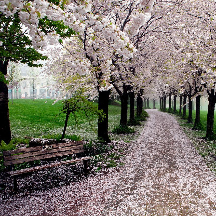 Весенняя дорога через парк Спенсера Смита (Spencer Smith Park): Берлингтон, Онтарио, Канада, автор - Shawn Marshall