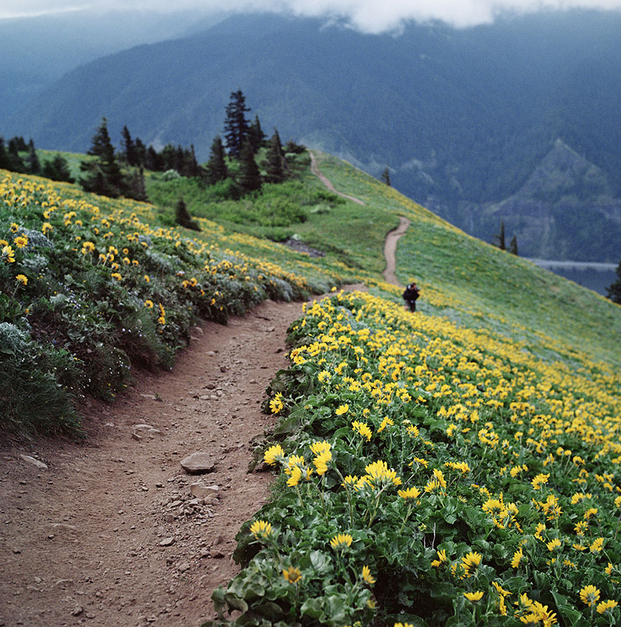 Весна на Дог Маунтен (Dog Mountain – «Собачья гора»): Вашингтон, США, автор - Danielle Hughson
