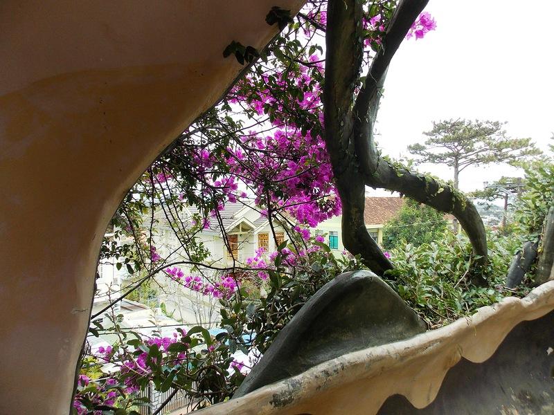 «Гостевой дом Ха Нга» (Hang Nga Guesthouse), Вьетнам - заросшая терраса