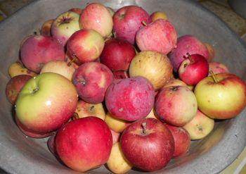 садовые красно-желтые яблоки в медном тазу