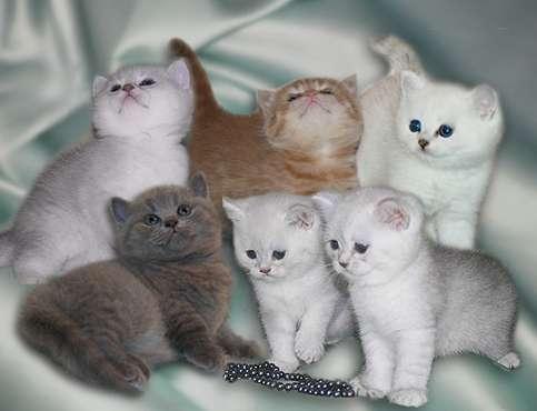 Как правильно выбрать котенка и какая порода подойдет именно вам