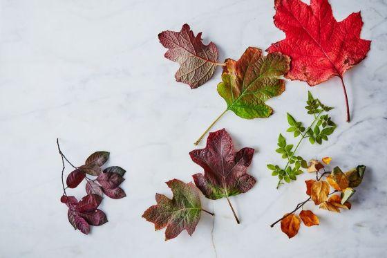 Как сохранить и креативно использовать осенние листья