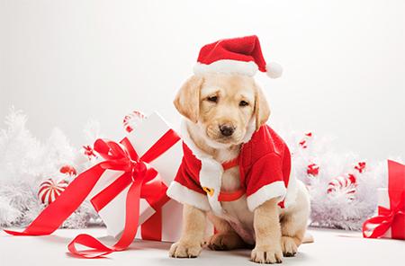 Как не ошибиться с выбором подарка на Новый год