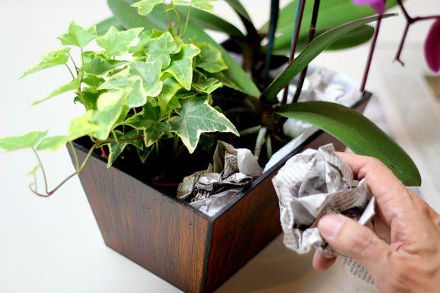 Как оригинально оформить орхидею для подарка на любой праздник