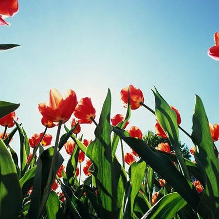 Солнечная энергия для вашего сада