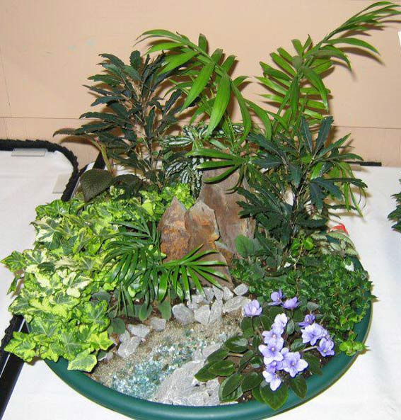 Как создать карликовый сад в квартире?