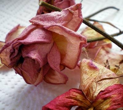 Как засушивать цветы
