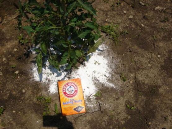 Как с помощью простых и доступных средств облегчить работу в саду