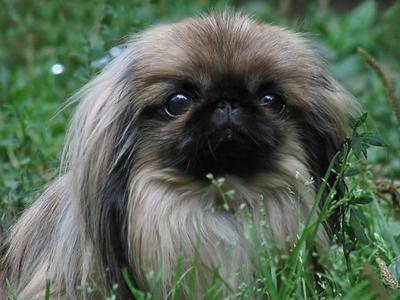 Как выбрать породу будущего щенка?