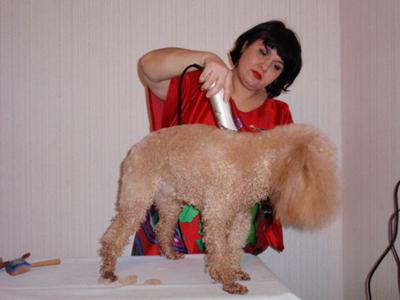 Даже если ваше животное от природы длинношерстное, обязательно подстригайте к лету его шерсть
