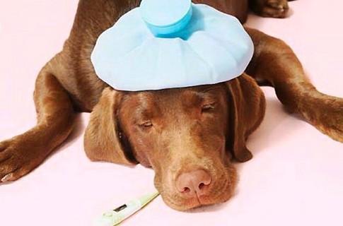 Как оказать первую помощь собаке при отравлении?