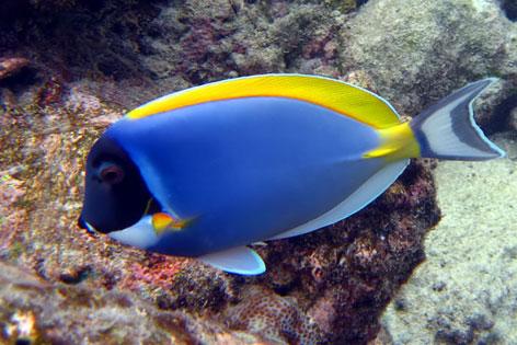 Как любоваться подводным миром без погружения. Снорклинг.
