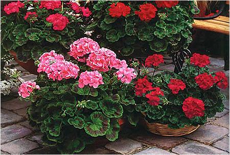 Как выбрать растения для домашнего уюта?