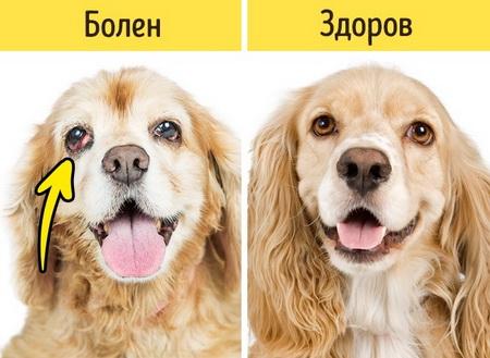 Как понять, когда показать питомца ветеринару?