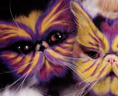 Как изменить цвет кота в фотошопе