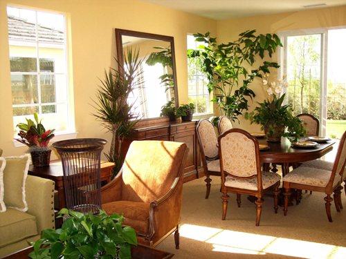 Как с пользой украсить интерьер комнатными растениями