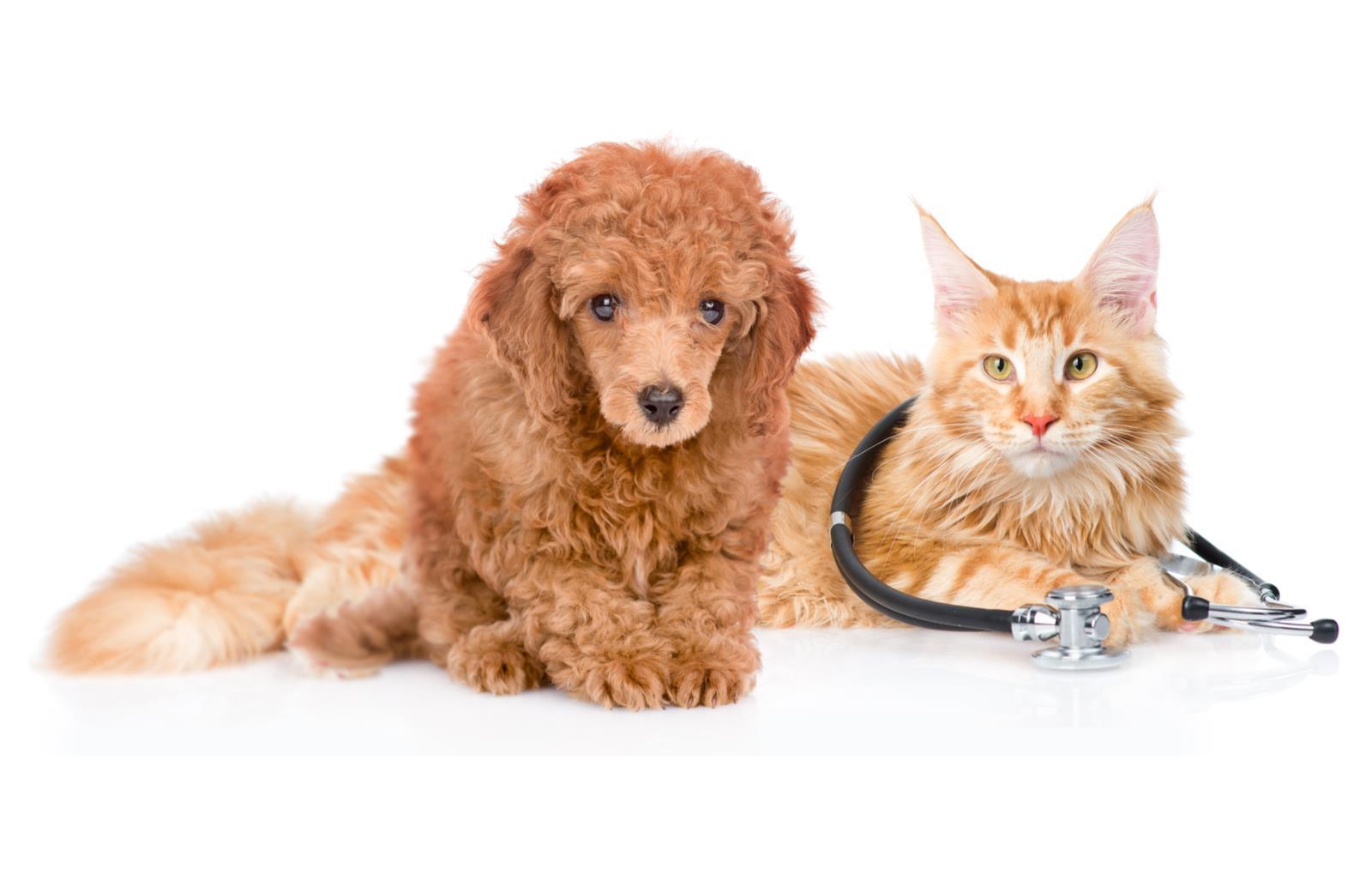 список проверенных ветеринарных клиник