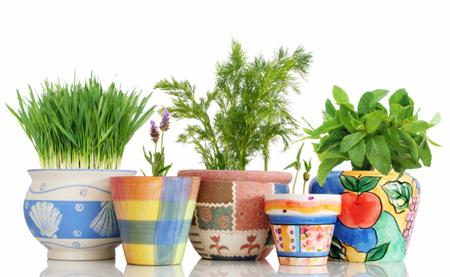 начните выращивать зелень на окне, ее яркие цвета живо напомнят вам о лете