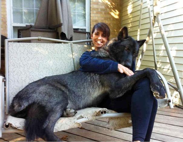 огромный черный пес на диване-качелях на руках у девушки