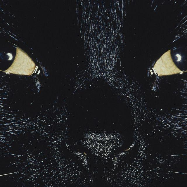 Коты душат младенцев