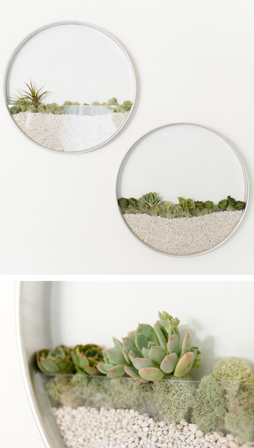 Вертикальный флорариум за стеклом. Компания KimFisherDesigns.