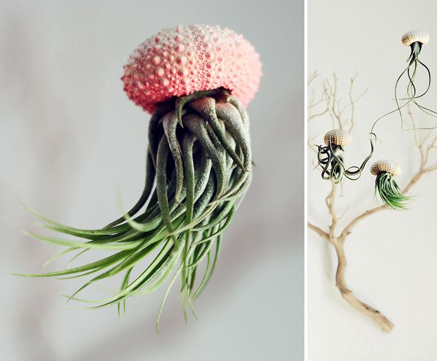Кашпо для «воздушной» посадки – «Медуза» от Cathy Van Hoang из Petit Beast. Выполнены из керамики и настоящих панцирей морских ежей.