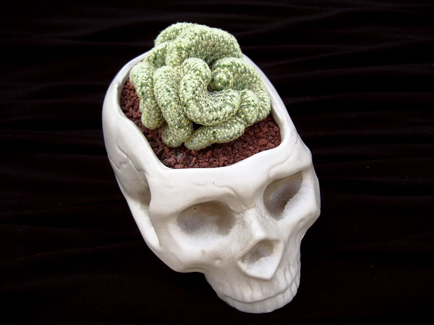 Цветочный горшок-череп для кактусов извилистой формы