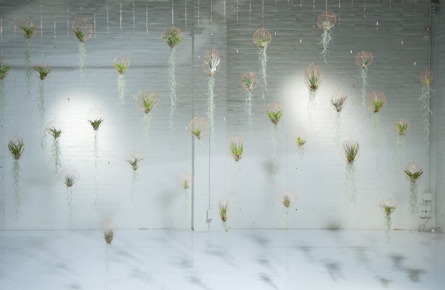 Шары из сетки для воздушных растений