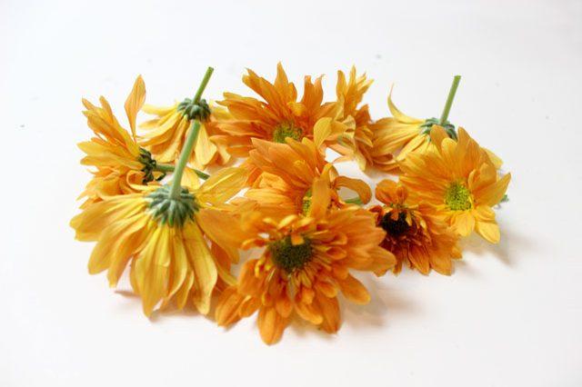 Отрезаем цветы, оставляя под каждым стебель длиной около 2,6 см