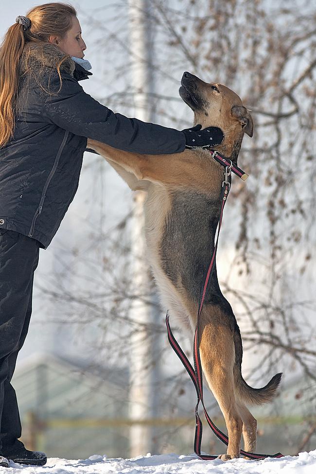 Подвяжитесь на добровольной (неоплачиваемой) основе на работу в приюты для животных