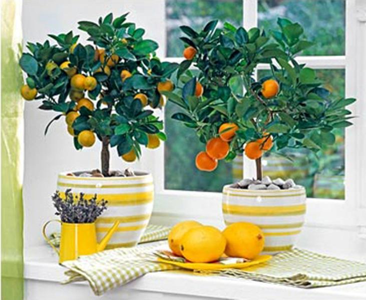 Начните выращивать на окне что-нибудь экзотичное на подоконнике