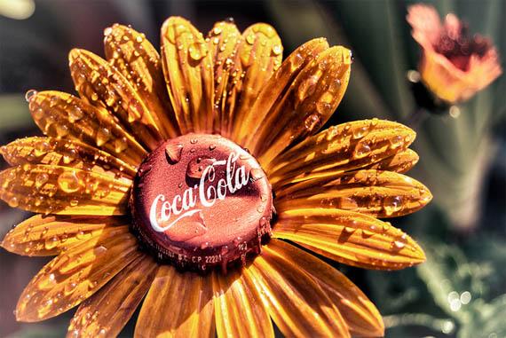 Coca-Cola герберы удобрение растение Кока-колой