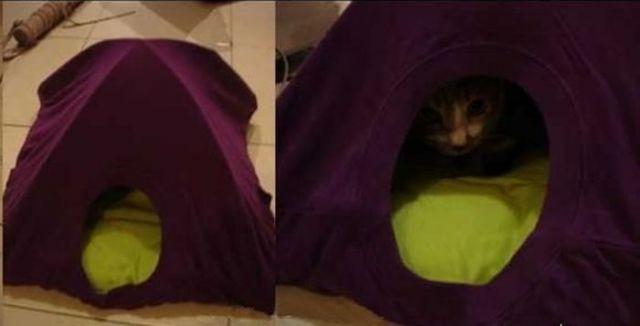 готовый домик для кошки из футболки своими руками