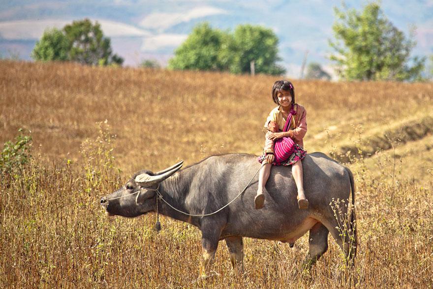 поездка в школу на буйволе – Мьянма