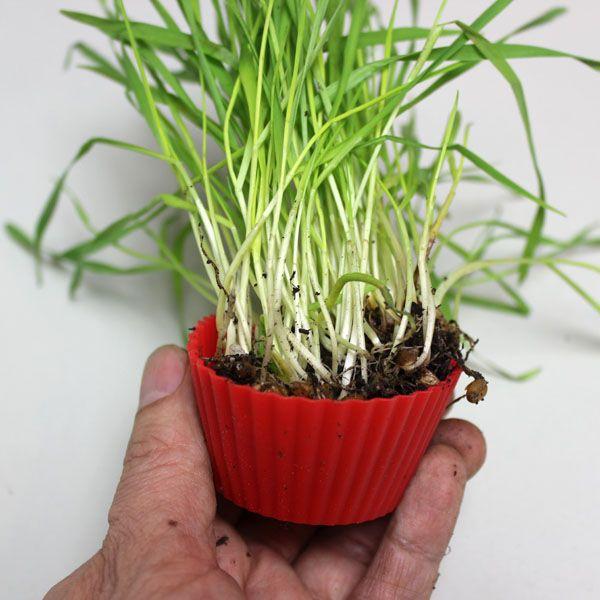 помещение травы в кексовую форму