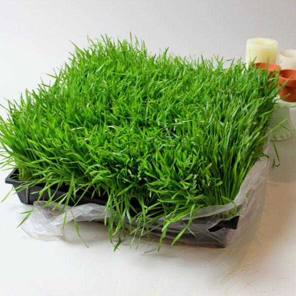 пласт молодой пророщенной травы