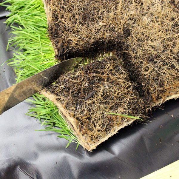 отрезание пророщенной травы от пласта