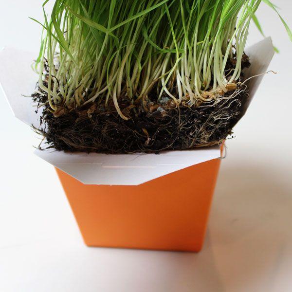 Помещение травы в коробку для еды на вынос
