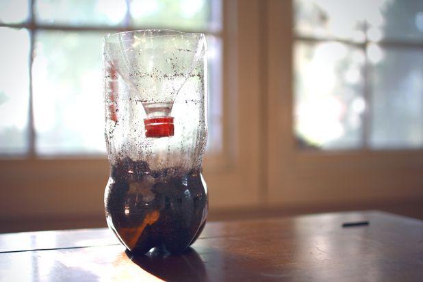 Как сделать замкнутую экосистему в бутылке: в копилку научных проектов