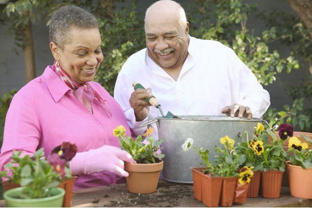 Сажайте растения в землю в горшках, пожилая пара садоводство вместе