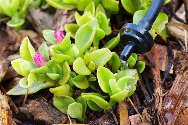 капельная система полива сада-огорода
