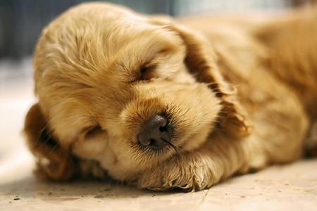 подкрадитесь к спящему животному и сделайте несколько снимков крупным планом спящих мордочек, естественных поз, спокойных закрытых глаз