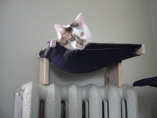 Как для кота сделать гамак-лежак в виде грамотной надстройки на батарею