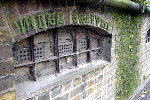 эко-граффити из мха: надпись