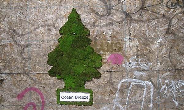 эко-граффити из мха: освежитель воздуха