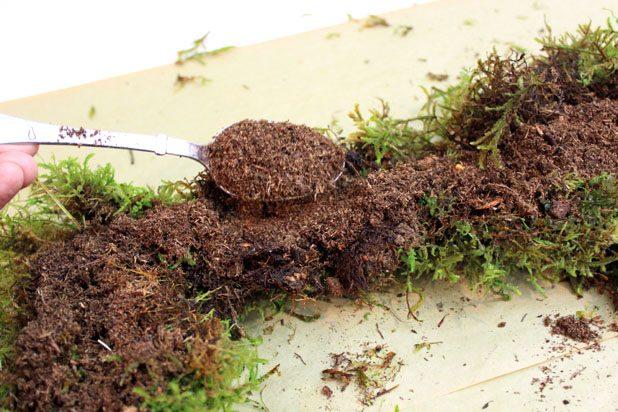 Ложкой дозами перенесите торфяной мох поверх почвы на раме