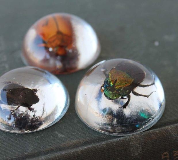 Как поместить жука в «стекло» и сделать из него подвеску/медальон (и не только)